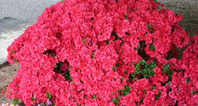 Ecco la data del 2018, le idee regalo economiche e solidali, i fiori da regalare con il loro significato in vista della festa della mamma.