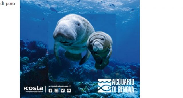 Ecco orari, promozioni speciali e offerte Trenitalia 2018 Acquario di Genova 2018 nonché offerte per mostre e musei.