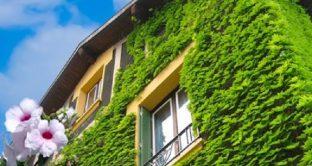 Ecco come risparmiare sulla bolletta energetica con le piante.
