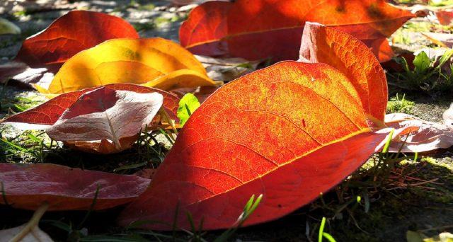 Piccoli suggerimenti per risparmiare sulla bolletta della luce anche in autunno.