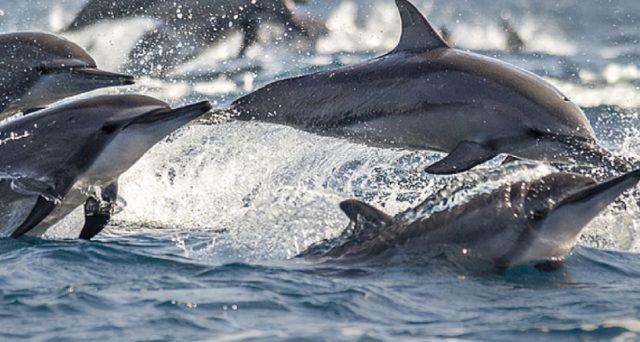 Diners Club Italia con WWF per difendere Natura e Ambiente.