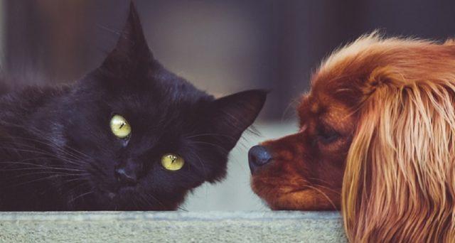 Non sappiamo più rinunciare ai nostri amici, gli animali da compagnia: ecco quattro suggerimenti su come risparmiare accudendoli al meglio.