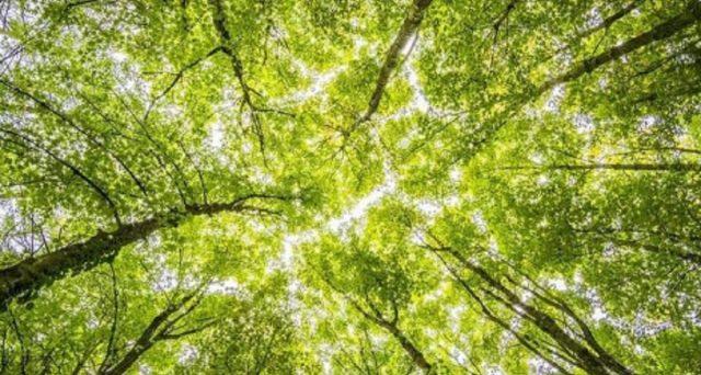 Giornata Nazionale degli Alberi: offerte green e non green. Con le prime si aiuta l'ambiente e si risparmia anche.