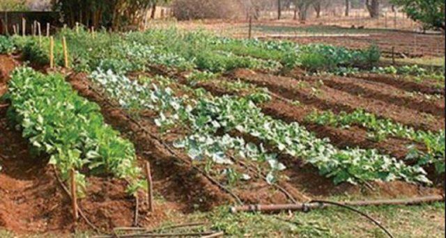 Prodotti naturali, cibo più buono e un po' di risparmio per le tasche: come coltivare un orto e avere grande soddisfazioni.