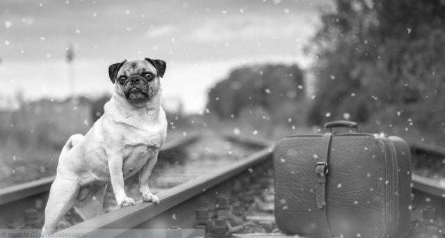 quanto paga il cane in treno trenitalia