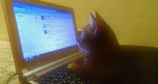 Guardare i video di gattini fa bene alla salute: sì, i gattini, proprio quelli che hanno invaso il web fin dalle sue origini. L'incredibile scoperta dell'Università dell'Indiana.