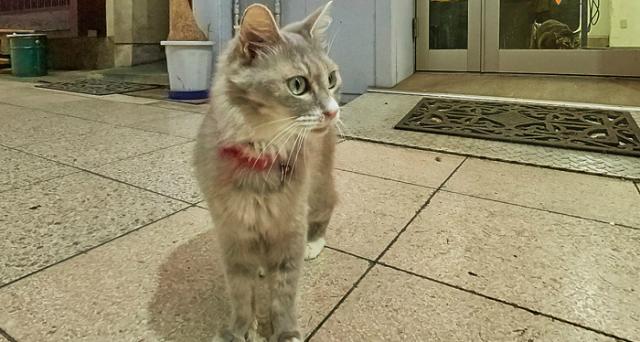 Amanti dei gattini su internet, ecco a voi la Cat Street View: progetto svolto in collaborazione con Google Maps per promuovere la città di Onimichi, in Giappone.