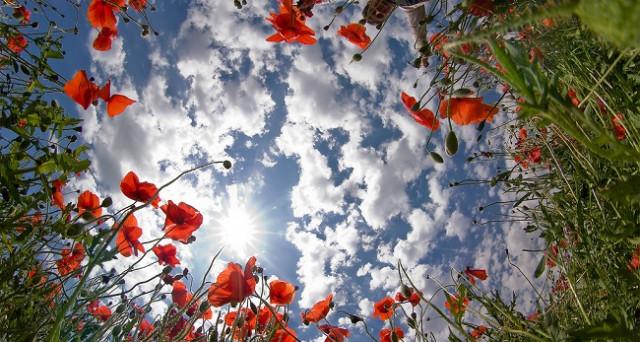 Perché l'equinozio di primavera cade oggi 20 marzo 2017? le motivazioni e la speciale foto-gallery per gli auguri di buona primavera su WhatsApp e Facebook.