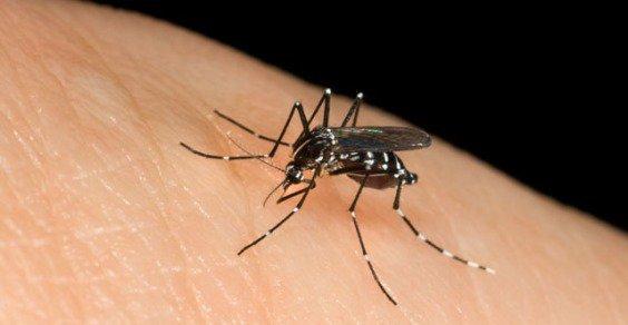 Ecco le info sulle migliori app anti zanzare per iOS e Android.