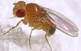 Interessante progetto in arrivo dagli Usa, i motori di ricerca di internet useranno il cervello dei moscerini per catalogare le informazioni degli utenti.