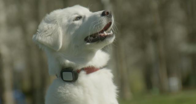 Kippy EVO, smartphone per cani e gatti, ora non potrete più perderli