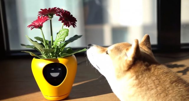 Vaso da fiori con intelligenza artificiale e sensori. Ecco Smart Planter Lua.