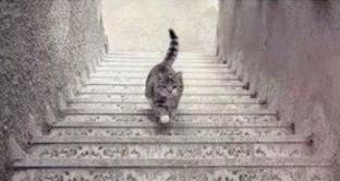 illusione-gatto-scende-scale