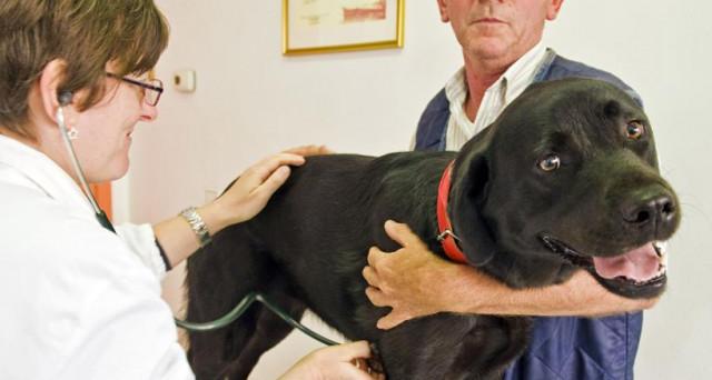 veterinario-permessi-lavoro